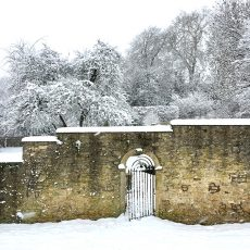 Snow-covered Batheaston gardens