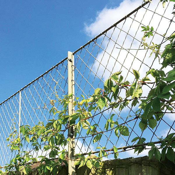 Bespoke Trellis Screening