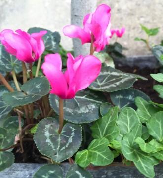 Winter zinc planter