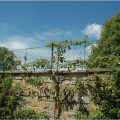 Privacy-Wall-Top-Trellis