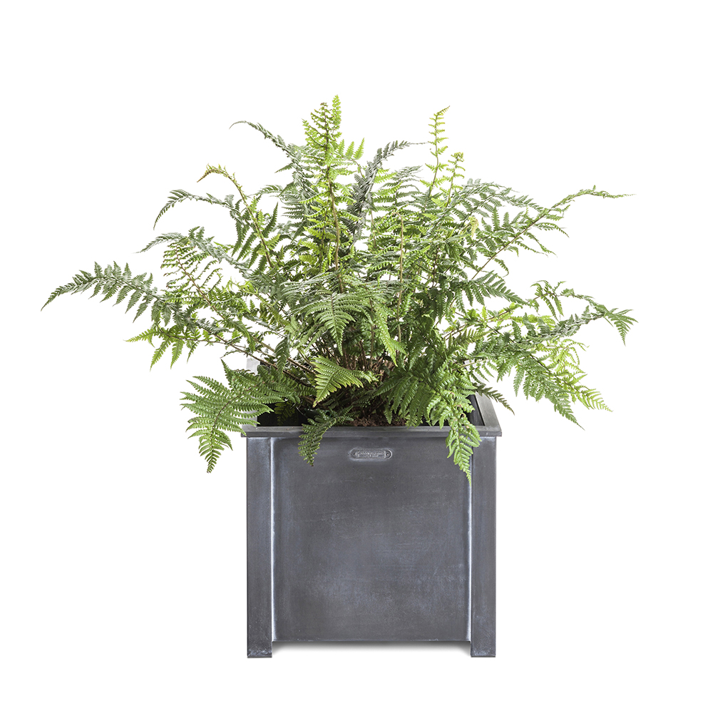 Small square steel planter with fern