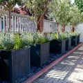 Square-Planters-with-Olive-trees
