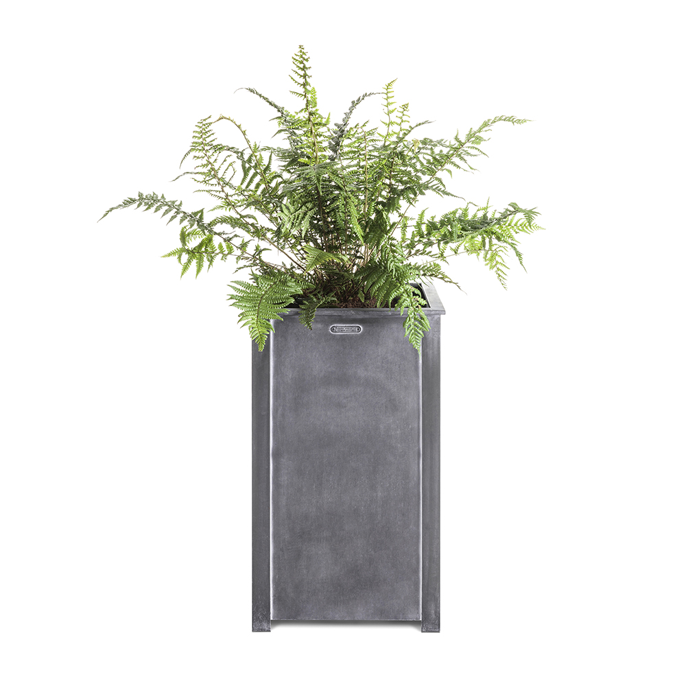 Tall steel planter with fern