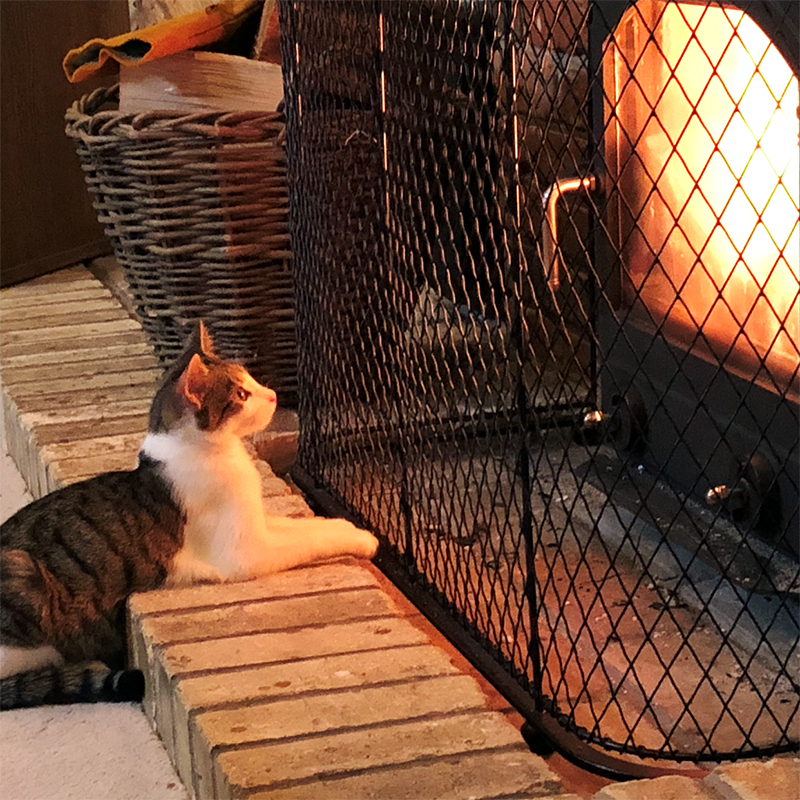 Traditional fireguard with cat