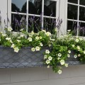 Window-box-Square