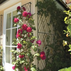 Trellis To Train Your Extraordinary Climbing Plants