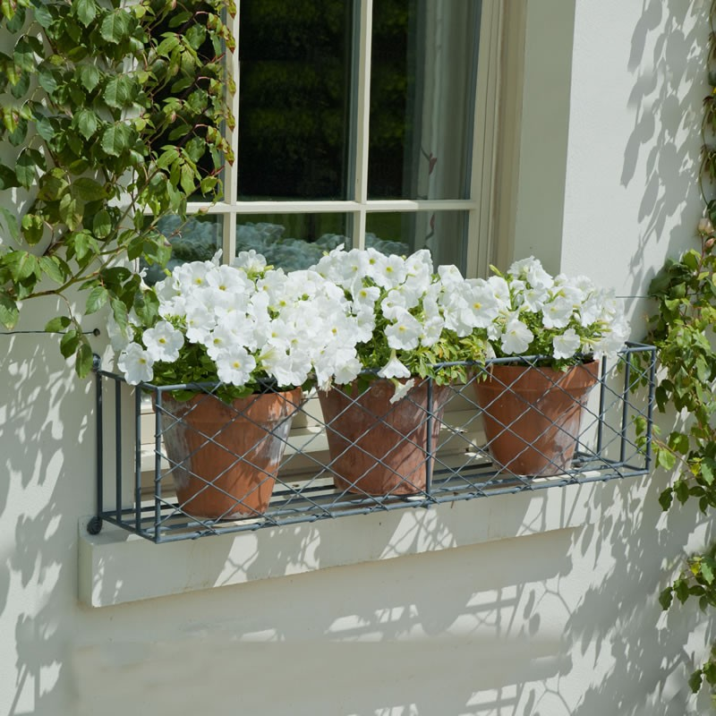 Window Box Planting Tips Garden Requisites