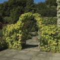 Large steel arch with side trellis