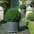 Large steel planters with box balls
