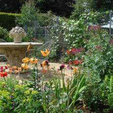 news a summer garden