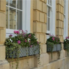news window boxes on great pulteney street