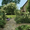 Rose arch with side trellis