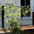 Scallop wall top trellis and wall top post in black