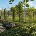 Trellis fence panels and posts